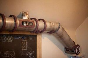 nos-amis-les-animaux-ont-aussi-le-droit-a-leur-meubles13