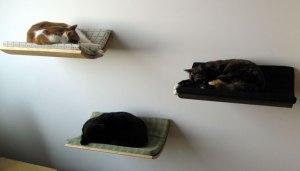 nos-amis-les-animaux-ont-aussi-le-droit-a-leur-meubles16