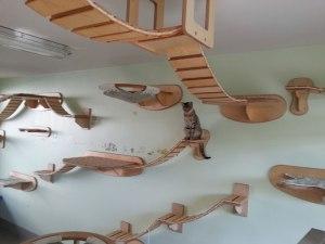 nos-amis-les-animaux-ont-aussi-le-droit-a-leur-meubles36
